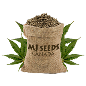 mj seeds canada