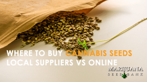 where to buy cannabis seeds