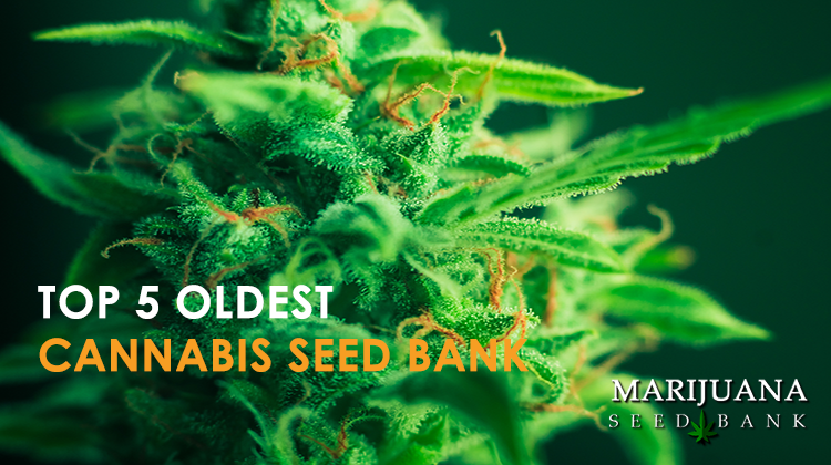 oldest cannabis seed banks